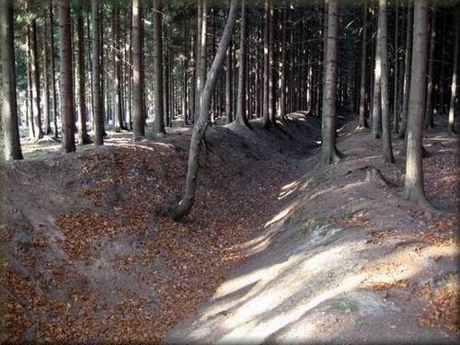 plavenbí kanál Suchý Šmelcovna v lese mezi Velenovem a Suchým